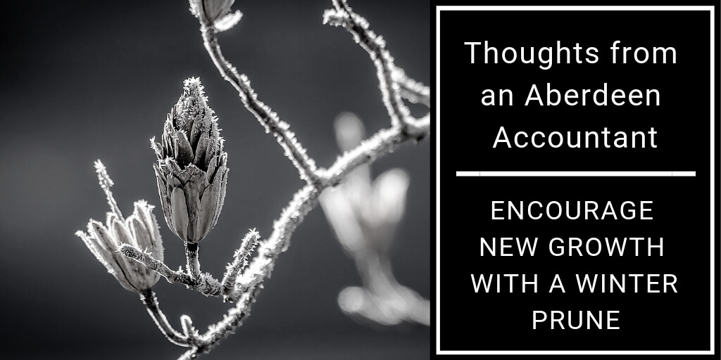 Encourage new growth with a Winter prune - blog feature image